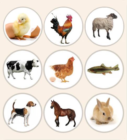 Animal species