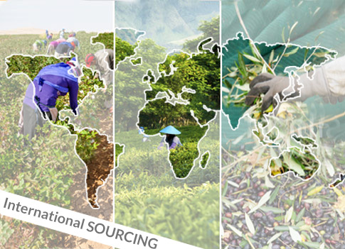 Worlwide partners to insure a sustainable sourcing